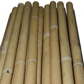 Baton (bo) de rotin brut
